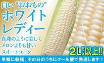 【2Lサイズ以上】白いおおもの「ホワイトレディー」約3.5kg話題の品種「おおもの」の純白スイートコーン!(とうもろこし)