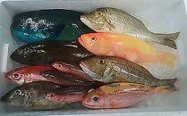 鮮魚まるごとセット