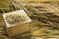2018年秋収穫分福岡県産ヒノヒカリ【玄米】4kg