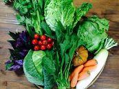 【冬限定!】沖縄の冬野菜詰合せ