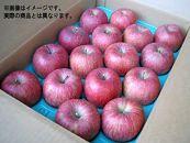 りんご「サンフジ」5kg(特秀14~18玉)
