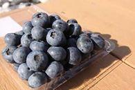 [大粒!希少!毎年大人気商品!/期間限定]淡路島で栽培した生食用【数量限定・予約】「ブルーベリー」500g×2パック