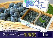 AT34無農薬栽培ブルーベリー生果実1kg