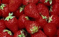 【受付終了】大網白里市発祥のイチゴ「真紅の美鈴」詰合せ