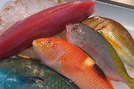 【泊漁港直送】沖縄美ら海まぐろと旬の沖縄鮮魚セット