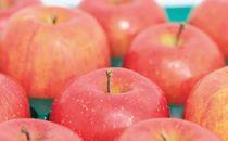 [2019年9月上旬~発送予定]農園主厳選「つがる」 信濃大町・峯村農園のりんご