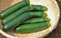 【期間限定】ズッキーニMサイズ11本セット(約2Kg)雪国津南の新鮮野菜