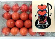 フルーツトマト「奏(かなで)とまと」約1㎏化粧箱入 土佐郷 元木青果