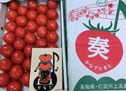 フルーツトマト「奏(かなで)とまと」約2㎏化粧箱入土佐郷元木青果