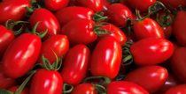 ミニトマト(アイコ)1kg 「生育時期に農薬を極力使わずに育てました!」