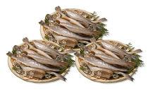【数量限定】<網走前浜産>生干し氷下魚(コマイ)【1.5kg(500g×3)】