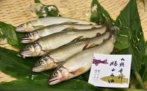 清流育ちの九頭竜川勝山あゆ(6~7匹)