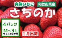 ≪1月出荷分≫【完熟いちご】さちのか(秀品)たっぷり4パック【紀州グルメ市場】
