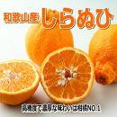 しらぬひ(デコポン)4.5kg/【和歌山産】『濃厚な味わいの春柑橘』