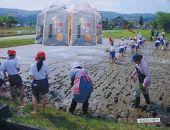 【頒布会】南魚沼産(しおざわ)こしひかり農薬不使用米玄米5Kg×6回