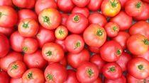 無農薬☆トマト(3kg)