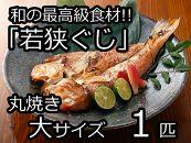 和の最高級食材「若狭ぐじ」丸焼き(大サイズ)1匹