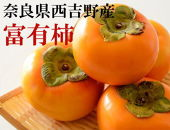 【数量限定】[本場の柿]奈良・西吉野の富有柿約7.5kgLサイズ