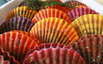 ぷりっと引き締まった肉厚な身と濃厚な甘味が人気の緋扇貝!30枚入り
