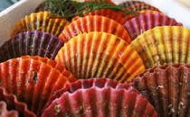 ぷりっと引き締まった肉厚な身と濃厚な甘味が人気の緋扇貝!35枚入り