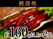 国産深蒸し鰻蒲焼2尾入約320g以上の大ボリューム