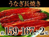 ブランド鰻『うな姫』使用!うなぎ長焼き大2尾
