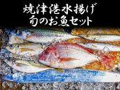 焼津港水揚げ旬のお魚セット