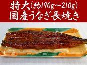 特大(約190g~210g)国産うなぎ長焼き