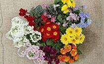 季節の花の詰め合わせ