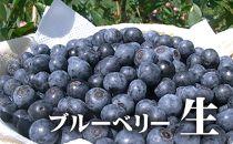 【ポイント交換専用】新鮮生ブルーベリー1㎏(7月採れ)