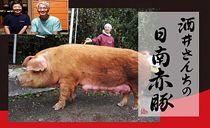 酒井さんちの日南赤豚