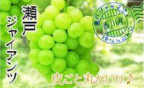 ☆9月発送受付開始☆香川産のもぎたて瀬戸ジャイアンツ2kg