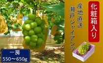 AA06 化粧箱入り産地直送瀬戸ジャイアンツ(1房550g~650g)