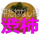 <2021年発送>吊るし柿用生渋柿(平たねなし柿)クリップひも付セット約15kg54~72個