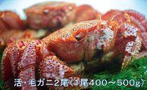 【地元現役漁師が厳選!!】活・毛ガニ2尾(1尾400~500g)2020年6月末頃から発送