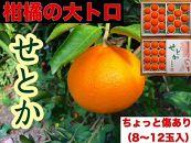 【ちょっと傷あり】『柑橘の大トロ』ハウスせとか8~12玉入