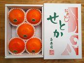 【ハーフ化粧箱】『柑橘の大トロ』ハウスせとか厳選5玉入