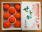 【ハーフ化粧箱】『柑橘の大トロ』ハウスせとか厳選8玉入