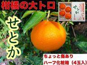 【ちょっと傷あり】ハーフ化粧箱『柑橘の大トロ』ハウスせとか4玉入