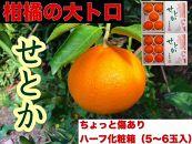 【ちょっと傷あり】ハーフ化粧箱『柑橘の大トロ』ハウスせとか5~6玉入