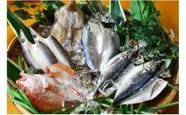 【7尾】低温熟成製法により、刺身を超えた旨味!佐伯で創業100余年、魚の目利きが選ぶ厳選干物詰め合わせ