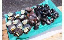 九州最東端のリアス式海岸でしか水揚げされない天然の磯物セット