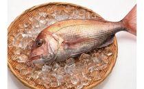 「愛海の恵み」大分豊後水道産天然真鯛(約1.8㎏~約2kg 1枚)