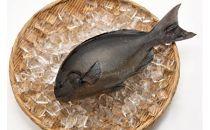 「愛海の恵み」大分豊後水道産天然メジナ(約2kg 2~4枚)