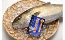 「愛海の恵み」大分豊後水道産養殖カンパチ(約3~4kg 1本)