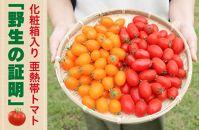 【2020年先行予約分】<化粧箱入/ギフト向け>亜熱帯トマト「野生の証明」