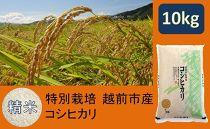 【精米】特別栽培 越前市産コシヒカリ 10kg