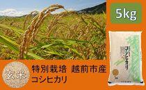 【玄米】特別栽培 越前市産コシヒカリ 5kg