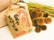 ◆【2018年産】契約栽培近江米【玄米】コシヒカリ2kg×1袋