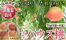 AC53-C長崎県産特別栽培ハウス桃1kg化粧箱※5月下旬~6月中旬に出荷予定
